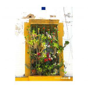 fenêtre, séville, sevilla, espagne, spain, window, fleurs, flowers